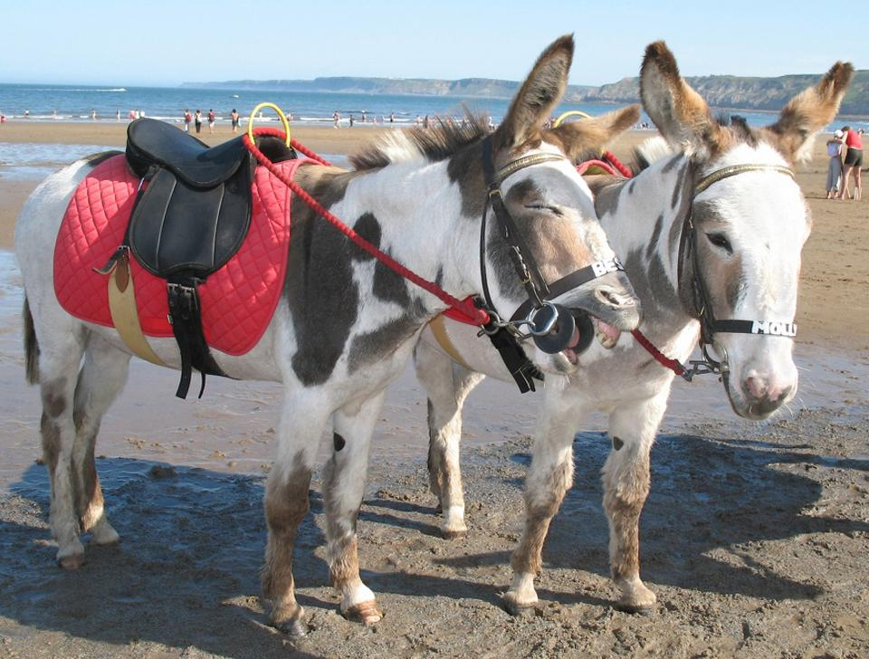 Donkeys in Scarborough