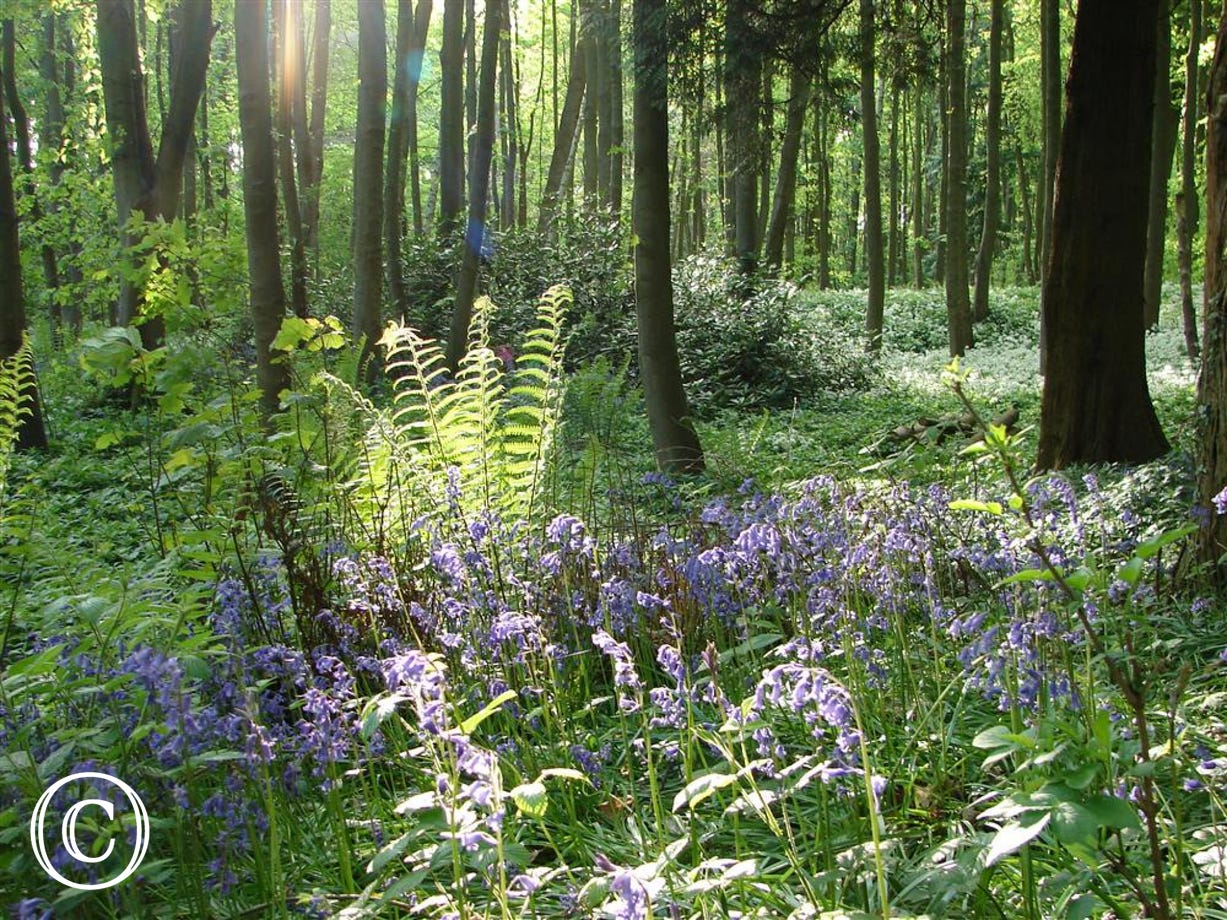 Woodland offers some lovely walks in the grounds