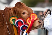 This is an image of North Yorkshire County Show